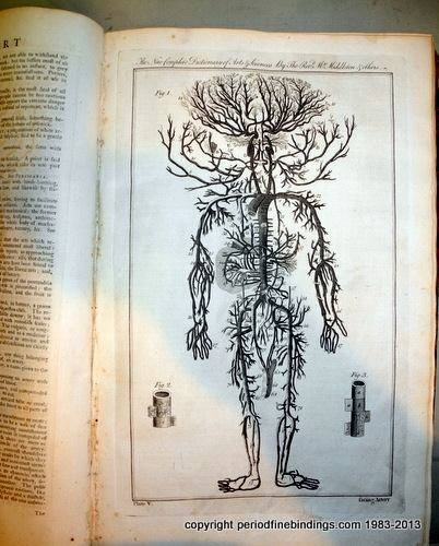 (image) the human root system (from a 1734 large folio)