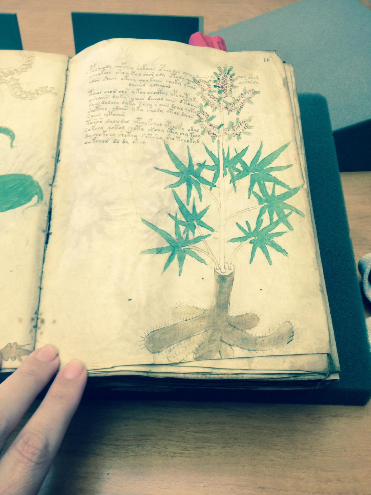 The Voynich Manuscript. Photo by Hillary Raimo Yale University 11/19/13