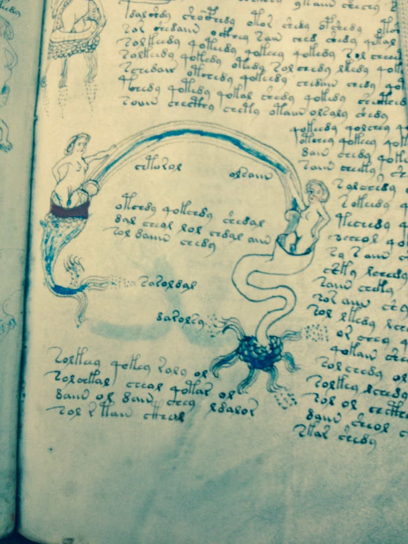 The Voynich Manuscript photo by Hillary Raimo Yale University 11/9/13