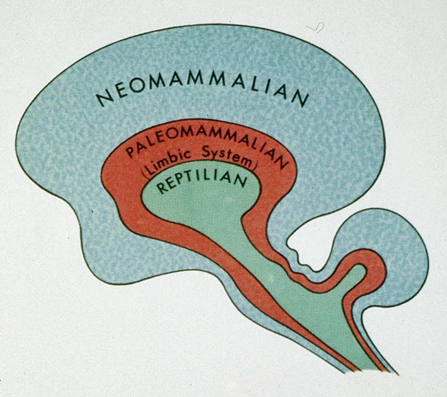 http://mybrainnotes.com/evolution-brain-maclean.html