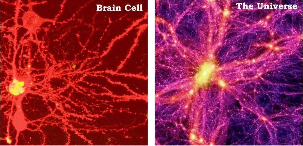 brain-cell-universe