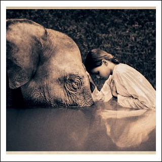 Ashes to Snow by Gregory Colbert