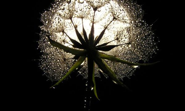 moon_garden_flower600