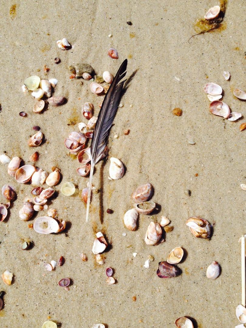 Feather crosses my path after offering to a seagull who has passed into spirit. photo by Hillary Raimo 4/28/14