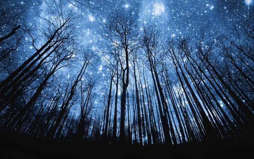 photo-manipulation-starry-night-in-forest-wallpaper